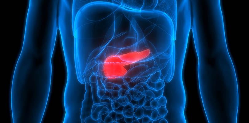 3D illustration of human anatomy, pancreas featured