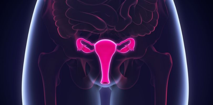 Where uterine cancer occurs in the human body.